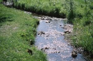field creek 0001